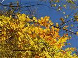 Sv. Primož nad Kamnikomzlate jessenske barve