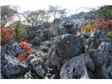 Stene Sočerge -Kraški rob,spodmoli,naravni most, Lačna, Hrastovlje  Pot Kraškega roba .