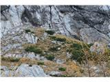 Rjavčki vrh ali Planinšca ( 1898m )Na nasprotnem bregu opazimo ogromno čredo gamsov.