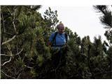 Alta via CAI Gemona (greben Lanež - Veliki Karman)Zelena kosmačija, nič kaj prijazen način napredovanja. Doletela nas je na sestopu z Laškega plaza
