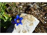 Po poti Cvetja v jeseniPoletje je mimo-pa vendarle še srečamo kako gorsko rožico.