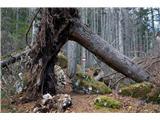 GrlovecNekaj podrtih dreves ne ovira napredovanja