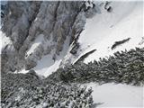 Krnička gora iz Matkove KrnicePrehod med borovci.