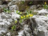 Krnička gora iz Matkove KrniceTja, kjer ni več belo, ampak rumeno.