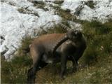 Turska gora čez Kotliški graben in Žmavčarjilepotec se je popraskal in....