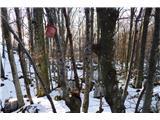 Mont Mia  ( Mija ) 1237msolnica ograjena z bodečo žico - to je že v italiji