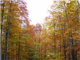 Jesen v vseh svojih barvah