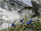 Prizor ob poti na Veliki vrh