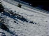 Goli vrh  1787 mnmUtrinek