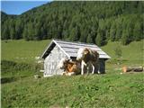 kravice na planini Konjščica