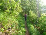 AmarianaPrvi del poti poteka v gozdu