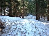 Čisti vrhin še veliko snega v gozdu