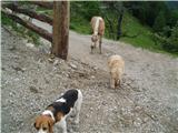 Kam s psom?Pri Knezu na poti na Strelovec.