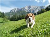 Kam s psom?Na planini Javorje na poti z Raduhe.
