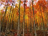 čarobna jesen