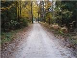 Rokovnjaška planinska pot...oblačno je bilo in svetlobe v gozdu je enostavno ,,sfalilo,,...