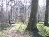Boč - Donačka goradebele bukve ob poti
