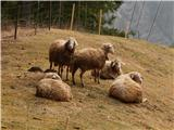 Črna na Koroškem (Mušenik) - sumahov_vrh