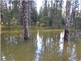 bohinjska_bela_sv_marjeta - Zgornji Goreljek (Pokljuka)