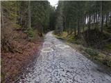 Cesta na Pokljuko (deponija lesa GG Bled) - berjanca