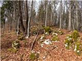 Gozd - vovar