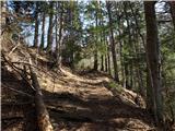 Goli vrh  1787 mnmpo poti, v dolini