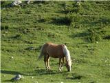 Kalški grebenZelo lepi konji na planini